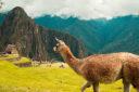 Spedizione Inca